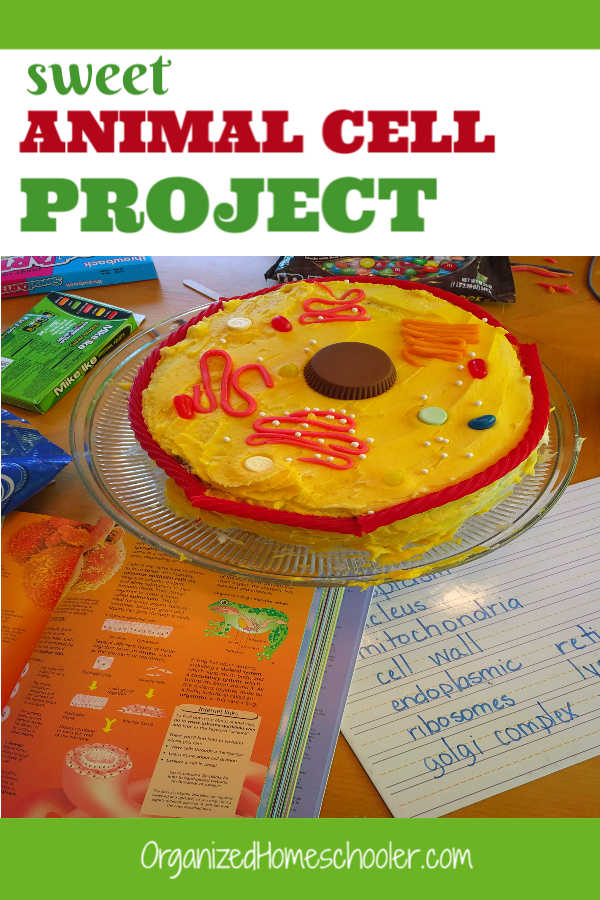 This edible animal cell cake is a great way to memorize animal cell organelles with candy. Find out how to make an edible animal cell model with all of the cell parts. #biology #animalcell #homeschool #scienceproject #organizedhomeschooler