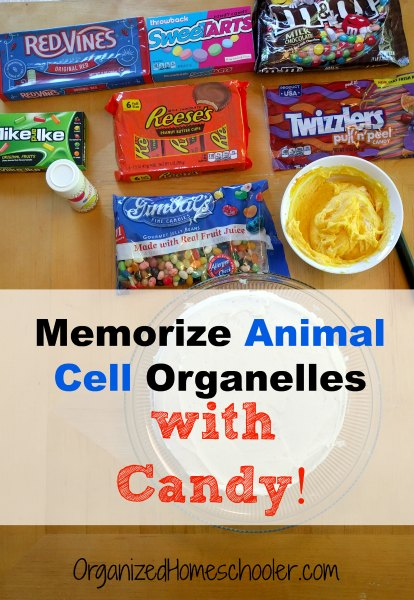 Memorize animal cell organelles with candy! This hands on biology lesson is delicious. #animalcell #biology #cake #handsonlearning