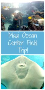 The Maui Ocean Center is a great place for a field trip on vacation!