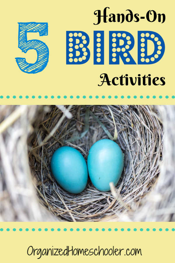 These bird unit activities are a great addition to any unit study. These hands-on activities make learning fun. Check out these awesome 5 ideas.