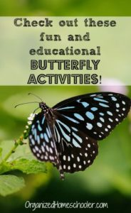 Celebrate spring with these easy educational butterfly activities. These simple butterfly activities are perfect for preschool and elementary school students.