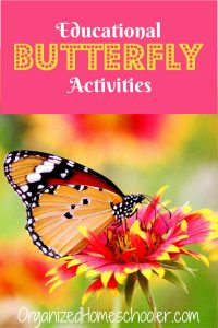 Check out these educational butterfly activities for kids. These hands-on activities are a fun way to learn about butterfly life cycles and types of butterflies.
