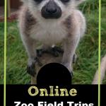 Take a Virtual Zoo Field Trip