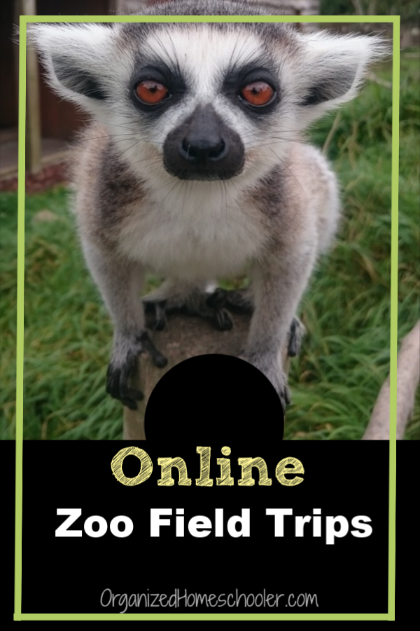 A virtual zoo field trip is a great alternative for the real thing. See your favorite animals every day from the comfort of your own home. Go on online zoo field trips as often as you want . . . for free!