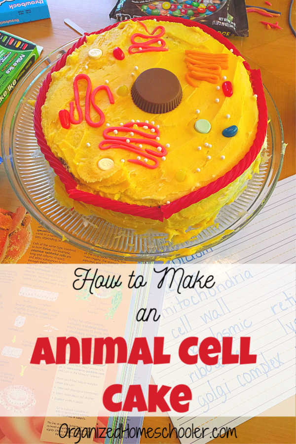 Learn how to make an animal cell cake with this step by step guide. This hands-on science project uses candy and cake to form an edible animal cell model.